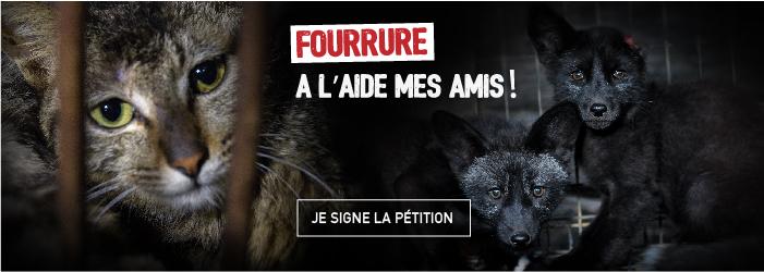 Fourrure 2 01