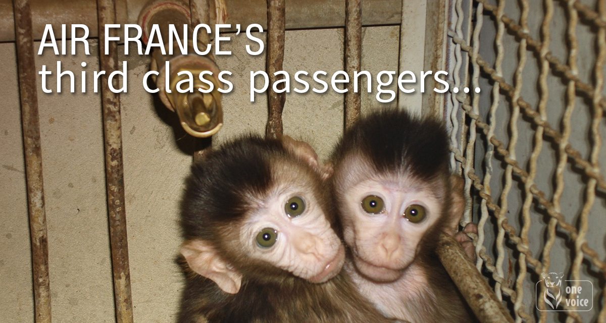 Large petition air france  d16996