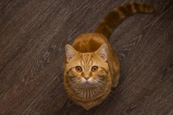 Enregistrer l'activité du cerveau du chat... pour qui ?