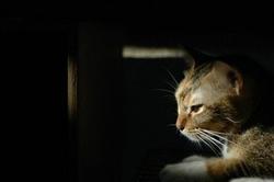 Le chat comme sentinelle de populations humaines