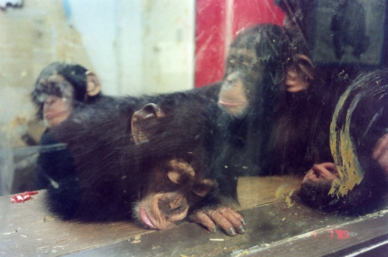 Large medium 2001 singes en cage   wspa    043 0