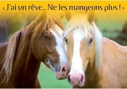 Large medium small thumb carte sentience chevaux