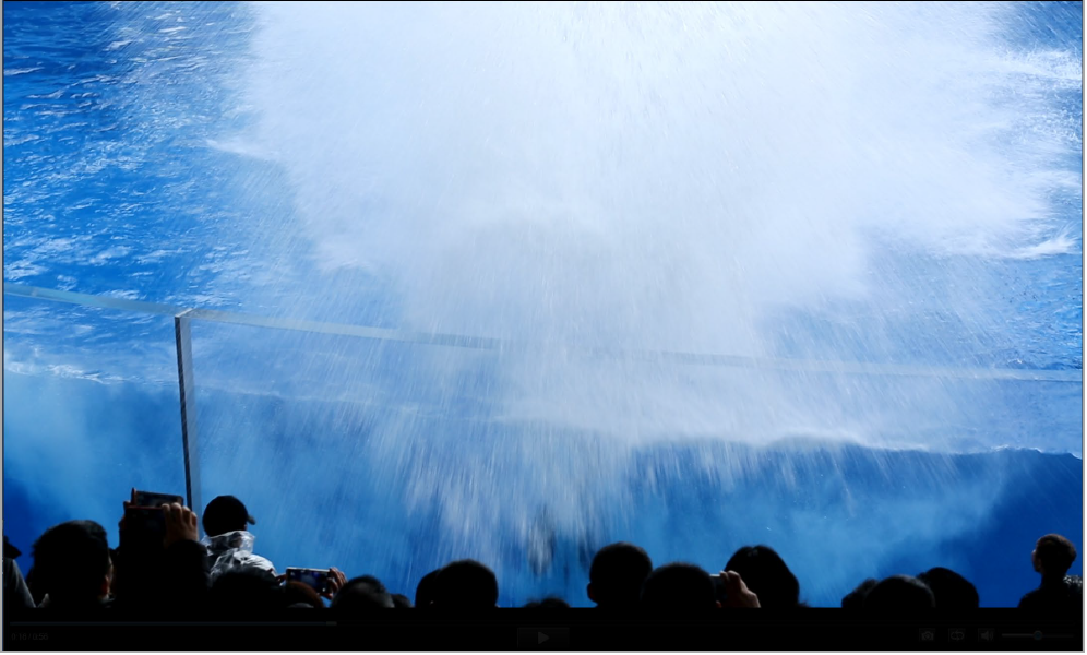 One of the large splashes reaching the audience, Shanghai Haichang Ocean Park, Shanghai, China (screen grab from video taken 20181223, © Ingrid N. Visser).
