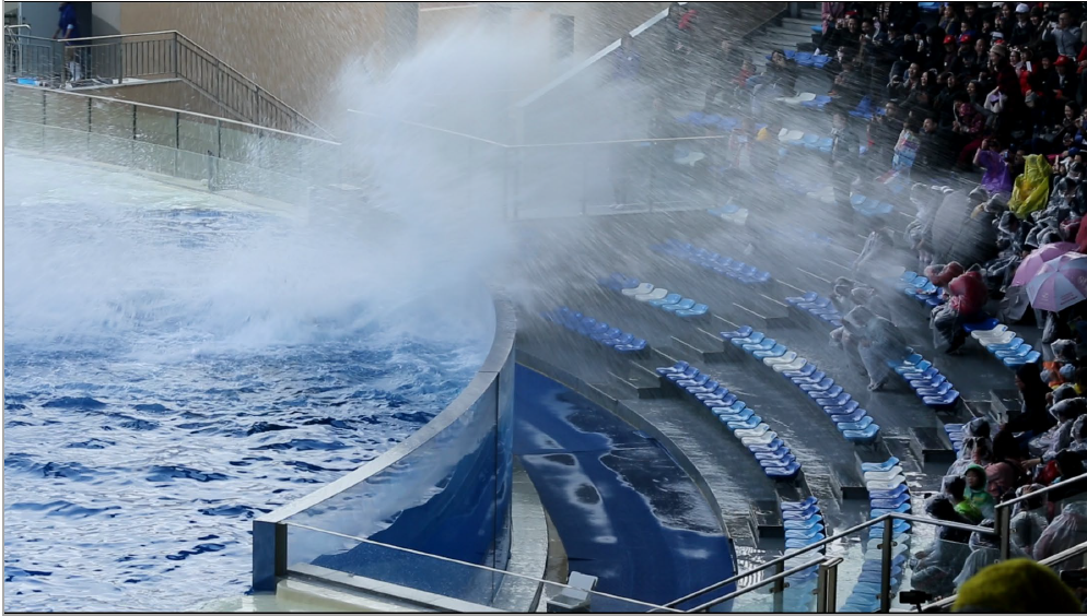 Another large splash reaching the audience, Shanghai Haichang Ocean Park, Shanghai, China (screen grab from video taken 20181223, © Ingrid N. Visser).