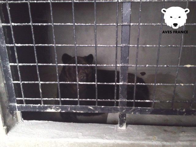 © Photo des installations des ours - mai 2014 confiées à AVES France par un lanceur d'alerte.